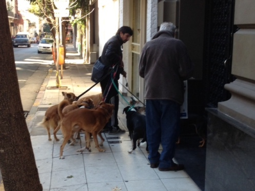 The Dog Walkers of Buenos Aires